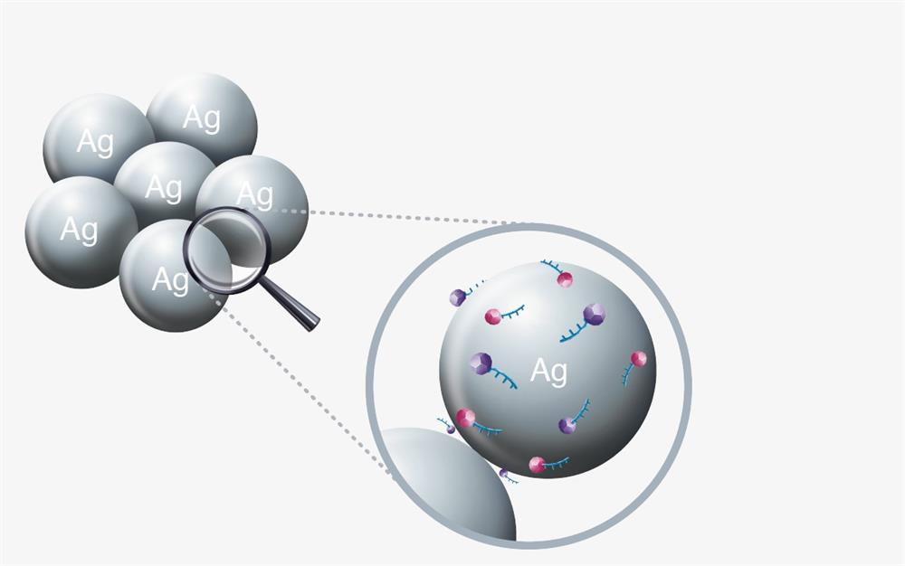 Probes adsorbed on silver nanoparticles.
